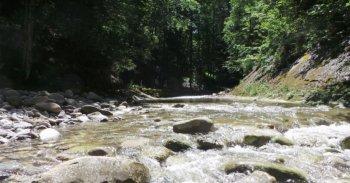 Fluss in steinigem Bachbett im Wald