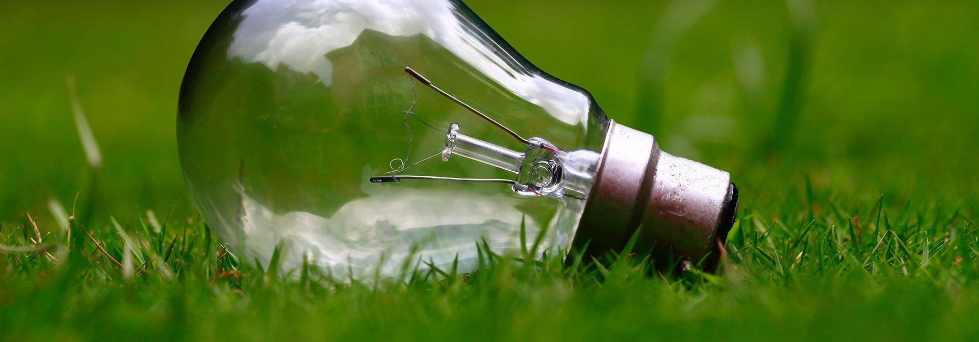 Glühbirne im Gras
